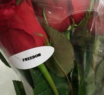 get free 1